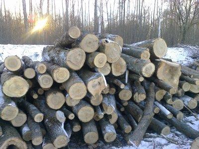 perkame medienos atliekas kirtavietėje