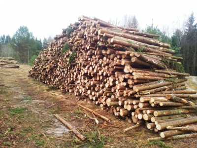 Brangiai perkame miškus su žeme, miškus išsikirtimui