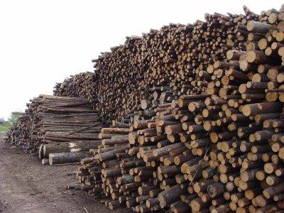 Perkame žaliavą biokurui Lietuvos šiaurėje, bei žemaitijoje