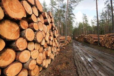 Perkame medienos sandėlius