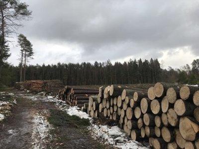 perkame medienos sandelius